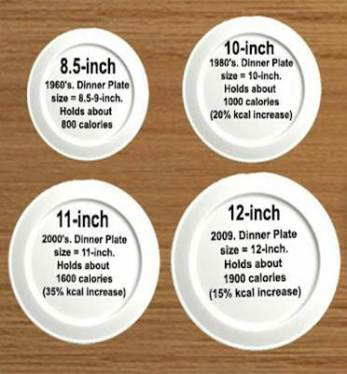blog Plate size by years