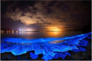 PR 6 bioluminescent-bay--5